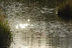 MultiSun (Tony Tooth) Tags: nikon d7100 nikkor 55300mm sunlight pond lake water ripples reflection rudyard staffs staffordshire