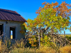 """""""Autumn Present, Autumn Past"""" (bradhodges09) Tags: newmexicophotography newmexicoskies newmexico oldhouses abandonedhouses abandonedbuildings bluesky brightcolors fallleaves fallcolor fall autumnleaves autumncolor autumn"""