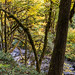 Table Rock Fork, Molalla River in autumn