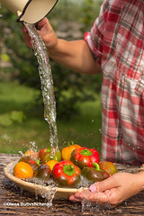 web-Peppers and tomatoes-are-washed-with-water-from-a-jug (stok-1707) Tags: pepper crop water summer autumn bright red orange ripe juicy village garden outdoor