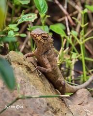 Local Thai lizard chilling out #lizard #reptile #lizardsofinstagram #reptilesofinstagram #lizards #gecko #beardeddragon #reptiles #travelling #beardeddragonsofinstagram #geckosofinstagram #crestedgecko #traveler #leopardgecko #tourism #reptilesofig #lizar (justin.photo.coe) Tags: ifttt instagram local thai lizard chilling out reptile lizardsofinstagram reptilesofinstagram lizards gecko beardeddragon reptiles travelling beardeddragonsofinstagram geckosofinstagram crestedgecko traveler leopardgecko tourism reptilesofig lizardlove travelingram beardies beardie pogonavitticeps beardeddragons igtravel traveller justinphotocoe