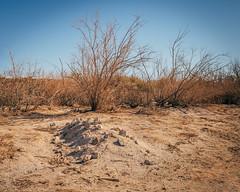 Holes In The Desert (Pedalhead'71) Tags: sonoran desert california grave hole