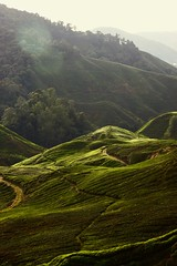 Cameron Highlands '18 (ameliayjt) Tags: cameron highlands cameronhighlands malaysia tea teaplantation nature landscapes green sunset sun hill