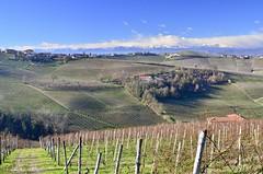 Vicinity of Asti (Waldek P.) Tags: italy langhe piemonte włochy piemont wino wine vineyard winnica barolo nebiolo muscat