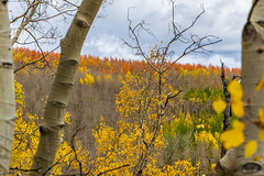 A touch of red above (palbion) Tags: blossomsfoliage twinlakes colorado unitedstates us