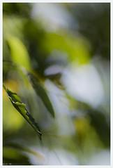 autumn palette (i.v.a.n.k.a) Tags: autumn colours colour nature leaves leaf bokeh ivanadorn sonyalpha