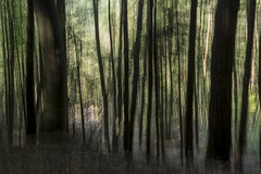 Hiking in the southern Palatinate (Germany) (tseehaus) Tags: südpfalz southernpalatinate germany hiking woods icm intentionalcameramovement impressionistic