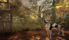 Dog In The Woods (ᗷOOᑎᕮ ᗷᒪᗩᑎᑕO) Tags: dog frog hollow flickr sl secondlife tp teleport dogging walk jian dalmation flowers autumn trees paths explore lm landmark painting classic retro feel canine capers