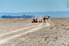 cbw_20180707_mongolia_N7475 (Landcruising Adventure) Tags: eastasia asia mongolia gobidesert desertlife camels animals