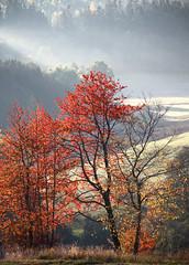 Autumn Colors (Gr@vity) Tags: autumn herbst fog eosr canon fall mist nebel dunst sunrays