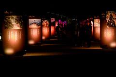 山口ゆめ花博-19市町の花通り #2ーYamaguchi Yume Flower Expo- Flower Street of 19 Cities and Towns #2 (kurumaebi) Tags: yamaguchi 阿知須 山口市 nikon d750 山口ゆめ花博 夜 night yamaguchiyumeflowerexpo