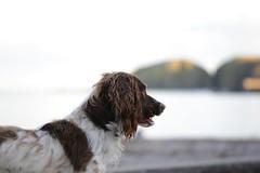 IMG_1084 Dog in Stonehaven (Fernando Sa Rapita) Tags: stonehaven scotland escocia dog perro canon canoneos eos6d