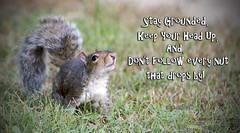 Brian_Squirrel Wisdom 1a LG_102318_2D (starg82343) Tags: 2d brianwallace outside outdoors pasadenamd maryland meme poster text words squirrel graysquirrel wisdom funny amusing textimage grass message advice wordstoliveby animal furry cute rodent mammal