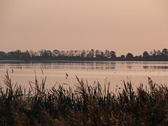 Morgenstimmung im Anklamer Stadtbruch (S. Markow) Tags: landschaft landscape outdoor nature natur wasser water baum tree sonnenaufgang sunrise anklam