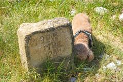 Seguret (jmarnaud) Tags: france 2018 summer family provence seguret fernande countryside animal dog chocolat