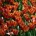 Primavera en el Jardín Botánico de Madrid