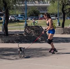 Roller honey (Ed-in-AZ) Tags: dog roller skate people park street x100f