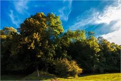Die Sonne streift durch`s Geäst (linke64) Tags: thüringen germany deutschland himmel wolken bäume wald natur landschaft baum blätter hügel wiese