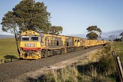 TR16 +  TR14 + DQ2008 at Danby (Trains In Tasmania) Tags: australia tasmania danby tasrail train freighttrain goodstrain logtrain trclass dqclass no34 tr16 2008 caterpillar diesellocomotive trainsintasmania canoneos750d canonef28135mm3556is stevebromley