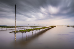 Whitstable Bay Oyster trestles (Nathan J Hammonds) Tags: whitstable kent uk oyster trestles racks sea seascape colour coast long exposure nd filter bw 10stop water clouds sky wet feet