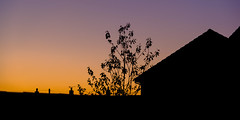 DSCF0559 (Adam-Barnes) Tags: garden shadow tree fujifilmxt20 pink house fujifilm black sihouette lowlight evening orange sunset wirral merseyside unitedkingdom