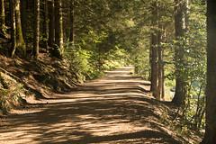 Le chemin (Gisou68Fr) Tags: chemin path lumière soleil clarté arbres forêt woods trees light lacdescorbeaux alsace france hautrhin 68