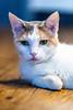 Javacats14Oct2018264.jpg