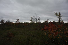 IMG_6339 (sjj62) Tags: fishcreekwi doorcountywi fall autumn woods doorcounty fishcreek 40d