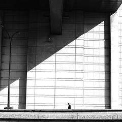 Along the huge wall (pascalcolin1) Tags: paris paris12 bercy homme man mur wall huge géant ombre shadow lumière light photoderue streetview urbanarte noiretblanc blackandwhite photopascalcolin 5omm canon50mm canon