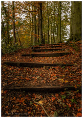 Come On Up (Steven Peachey) Tags: autumn autumnal trees canon stevenpeachey woodland 5dmarkiv canon5dmarkiv ef24105mmf4l durham leaves