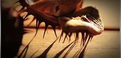 Gesztenye (vkaresz72) Tags: macro chestnuts spikes lights
