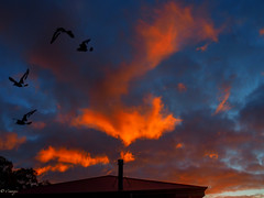 Apocalypse Sunset (el-liza) Tags: nature outdoor outside sunset sky colourful clouds vibrant vivid dramatic