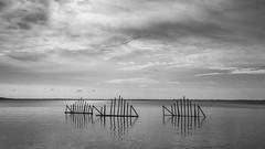 (z e d s p i c s™) Tags: szigliget balaton bw blackwhite hungary hongarije monochrome magyarország reflection fish 169 1810 zedspics