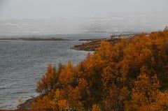 koibekklia (KvikneFoto) Tags: høst fall tamron nikon 2018 autumn landskap natur snø snow hagl hail