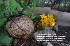 Never learned from past upheaval (Nelley) Tags: neverlearnt pastupheaval quotation wood words learning leafs treetrunk lillie flowers postcardpoetry text poemecho philopoet poetictirade thoughts nellypen
