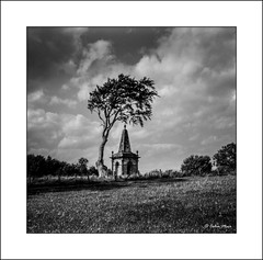 Monkton - Tree & Macrae - 2018-08-31st (colin.mair) Tags: 50feet 51816 6x6 75mm anastigmat ayrshire bw black blackwhite fp4plus film format iso125 ikon ilford macrae medium monkton monument nettar novar novaranastigmat75mmf45 tree white zeiss border f16 field frame monochrome scan