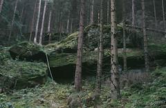 Sächsische Schweiz III (MarieHM) Tags: sächsische schweiz leica iiic