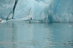 Glacier 59 (Krasivaya Liza) Tags: jokulsarlon glacier lagoon glacial cold arctic iceland icelandic iceberg ice icy floats boat boats