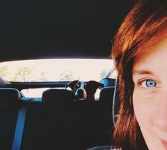 Got my eye on you....xx (shona.2) Tags: car pet dog arthur selfiesunday hss