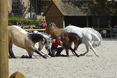 2018.06.21.130 HARAS du PIN - Toma et ses chevaux  de la Cie Atao (alainmichot93 (Bonjour à tous - Hello everyone)) Tags: 2018 france frankreich francia frankrijk frança γαλλία франция normandie orne pinauharas harasdupin haras animal mammifère équidé cheval horse pferd caballo cavallo cavalo paard άλογο лошадь