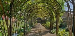 Kew Palace Garden (standhisround) Tags: kewgardens palace london england uk walkway rbg royalbotanicalgardens kew plants gardens