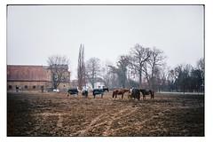 (schlomo jawotnik) Tags: 2018 april kleinflöthe reiterhof pferde acker spuren heuballen fressen gaul decke landleben landeier gebäude fachwerk schlomostierwelt usw
