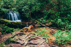 On the way to Spoonauger (J. Parker Natural Florida Photographer) Tags: spoonauger falls waterfall spoonaugerfalls burrelsford chatoogariver water longexposure scenic landscape nature naturalbeauty hike hiking trail carolina southcarolina sumternationalforest oconeedistrict upstate foothills appalachia appalachians mountains creek stream ndfilter neutraldensityfilter carolinas