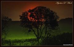 Alba d'Autunno - Ottobre-2018 (Agostino D'Ascoli) Tags: alberi alba nikon nikkor sicilia bivona texture nature landscape paesaggi creative photoshop agostinodascoli sole cielo verde ottobre autunno art digitalart