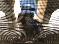 Snaps Around Atlanta (a.soper) Tags: atlanta georgia iphone 7 snap shots