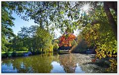 Herbst in Schneverdingen (Don111 Spangemacher) Tags: schneverdingen heidekreis herbst niedersachsen natur norddeutschland pflanzen park see teich bunt baum landschaft laubfärbung