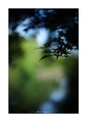 iPhone 画像5