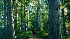 Emilia (Janos Kerekes) Tags: portrait forest woods autumn leaves sweden trees pine green