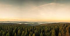 forest series #149 (Stefan A. Schmidt) Tags: wald forest germany landscape sunrise fog mist nebel scenic