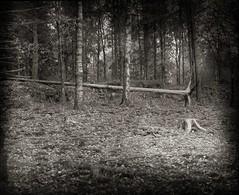 Eik skogen (Geir Bakken) Tags: kodak linhofcolor computar symmetrigon blackandwhite bw filmisnotdead filmphotography film analogue analogphotography landscape norway trees fireplace forest woods